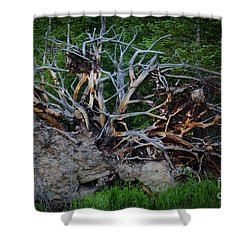 Exposed Roots Shower Curtain by John Roberts