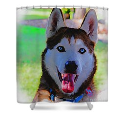 Shower Curtain featuring the digital art Expressive Siberian Husky  A62117d by Mas Art Studio