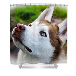 Shower Curtain featuring the digital art Expressive Siberian  Husky Photo C62017 by Mas Art Studio