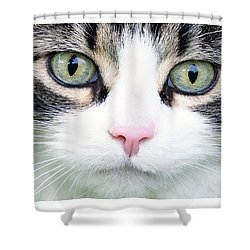 Shower Curtain featuring the painting Expressive Maine Coon D122016 by Mas Art Studio