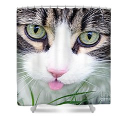 Shower Curtain featuring the photograph Expressive Maine Coon Photo A6217 by Mas Art Studio