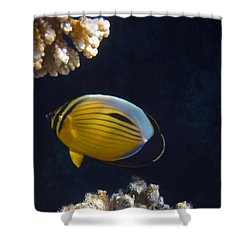 Exquisite Butterflyfish 2015 Shower Curtain