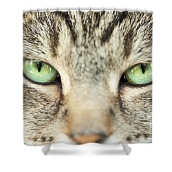 Extreme Close Up Tabby Cat Shower Curtain by Sharon Dominick