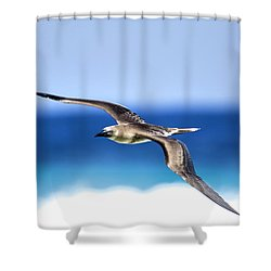 Eye Contact Shower Curtain by Sean Davey