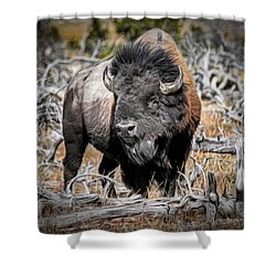 Eye Of The Buffalo Shower Curtain by Donna Kennedy