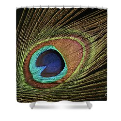 Eye Of The Peacock #11 Shower Curtain