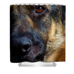 Eye Of The Shepherd Shower Curtain by Jai Johnson