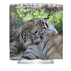 Shower Curtain featuring the photograph Eye Of The Tiger by John Black