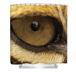 Eye On You Shower Curtain by Gary Bridger