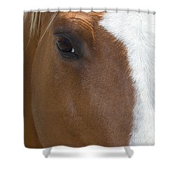 Eye On You Shower Curtain by Roberta Byram