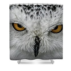 Eye-to-eye Shower Curtain by Brad Allen Fine Art