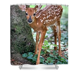 Eye To Eye With A Wide - Eyed Fawn Shower Curtain by Gene Walls