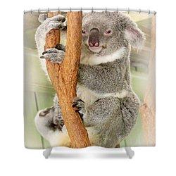Eye To Eye With Mr. Koala Shower Curtain by Susan Vineyard