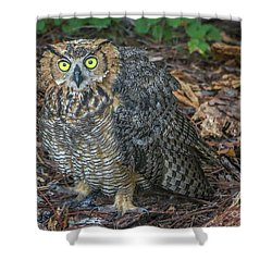 Eye To Eye With Owl Shower Curtain