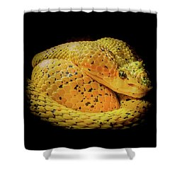 Shower Curtain featuring the photograph Eyelash Viper by Karen Wiles