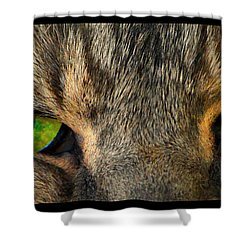 Eyes 1a Shower Curtain