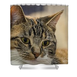 Eyes For You Shower Curtain