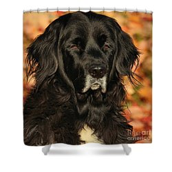 Shower Curtain featuring the photograph Eyes Of Autumn by Debbie Stahre
