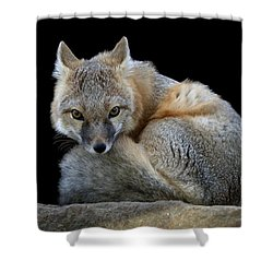 Eyes Of The Fox Shower Curtain