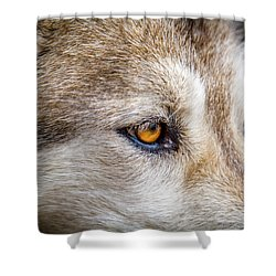 Shower Curtain featuring the photograph Eyes Of The Gray Wolf by Teri Virbickis