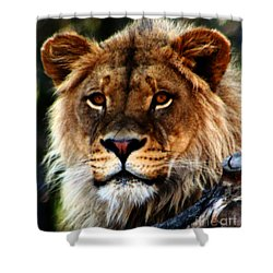 Eyes Of The Young King Shower Curtain by Nick Gustafson