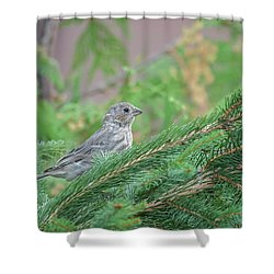 Eyes Up... Shower Curtain