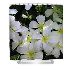 F2 Plumeria Frangipani Flowers Hawaii Shower Curtain by Donald k Hall