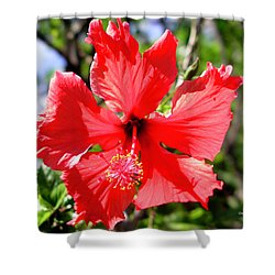 F20 Red Hibiscus Shower Curtain by Donald k Hall
