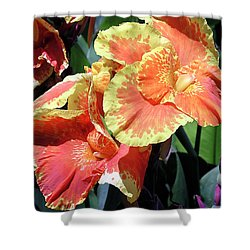 F24 Cannas Flower Shower Curtain by Donald k Hall
