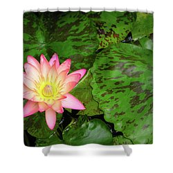 F6 Water Lily Shower Curtain by Donald k Hall