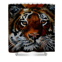 Face Of A Tiger Shower Curtain by Maris Sherwood