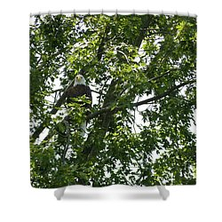 Face The Eagle Shower Curtain by Donald C Morgan