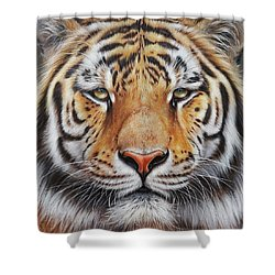 Shower Curtain featuring the drawing Faces Of The Wild - Amur Tiger by Elena Kolotusha