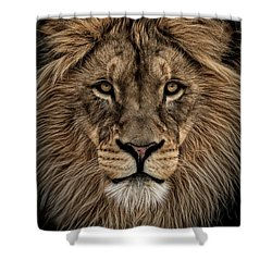 Facing Courage Shower Curtain by Brad Allen Fine Art