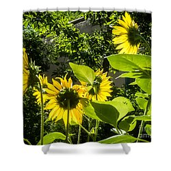 Facing The Sun Shower Curtain