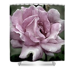 Faded Beauty Rose 0226 H_2 Shower Curtain