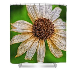 Faded Cone Flower Shower Curtain by Tom Singleton