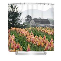 Faded Tulip Barn Shower Curtain