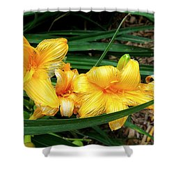 Fading Daffodils Shower Curtain