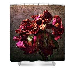 Shower Curtain featuring the photograph Fading Glory by Randi Grace Nilsberg