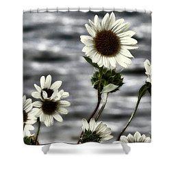Shower Curtain featuring the photograph Fading Sunflowers by Susan Kinney