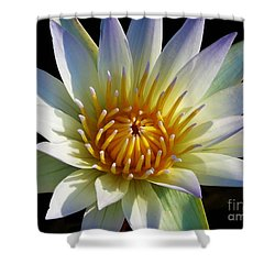 Fairest Lily Shower Curtain
