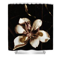 Shower Curtain featuring the photograph Fairy Iris. A Butterfly Landed On My by Mr Photojimsf
