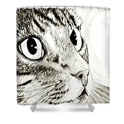 Fairy Light Tabby Cat Drawing Shower Curtain by Carrie Hawks