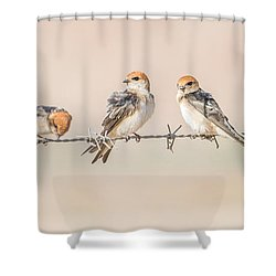 Fairy Martins Shower Curtain by Racheal  Christian