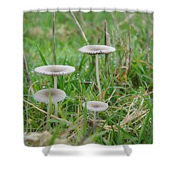 Fairy Steps Shower Curtain
