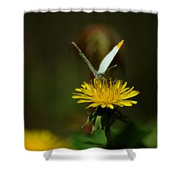 Falcate Orangetip Butterfly On Dandelion Shower Curtain