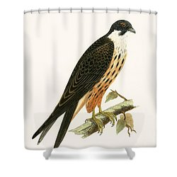 Falco Eleonorae Shower Curtain by English School