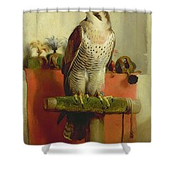 Falcon Shower Curtain by Sir Edwin Landseer