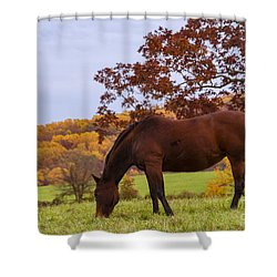 Fall And A Horse Shower Curtain